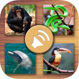 Animals' sounds for kids – Jungle, farm, marine animals and pets