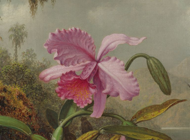 Martin Johnson Heade Artworks Stickers