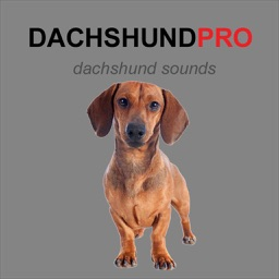 Dachshund Dog Sounds