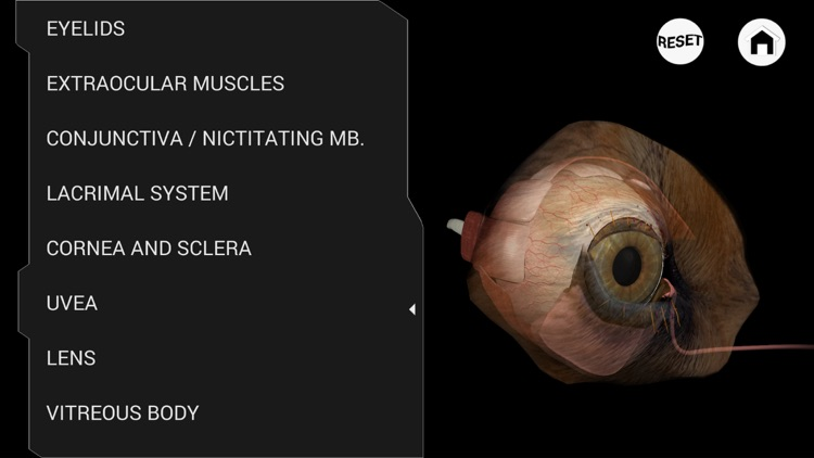 Ophthalmology in Dogs screenshot-1