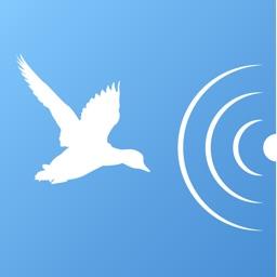 iDecoy for bird