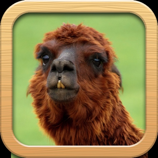 Funny Animals Catalog and Animal Soundboard