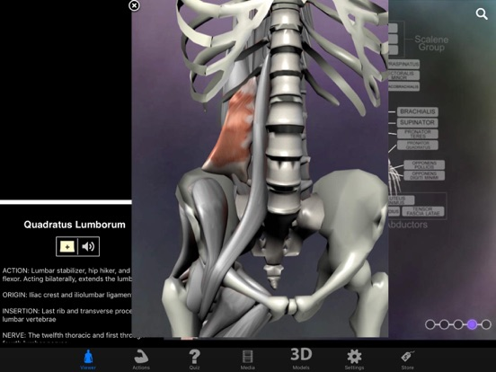 Muscle & Bone Anatomy 3D screenshot