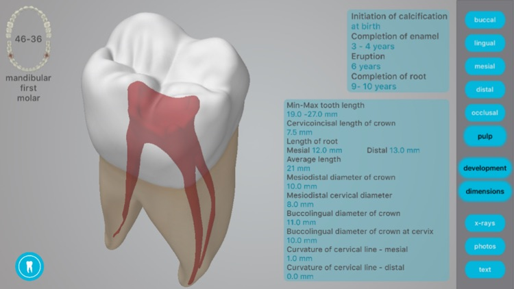 Dental Corpus Anatomy screenshot-4