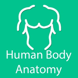 Organs of human body