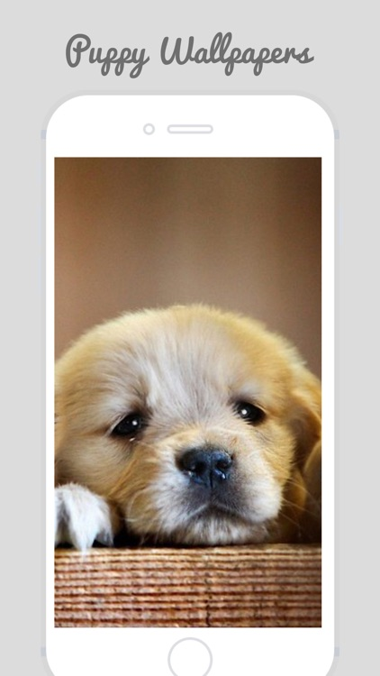 Cute Puppy Wallpapers screenshot-3