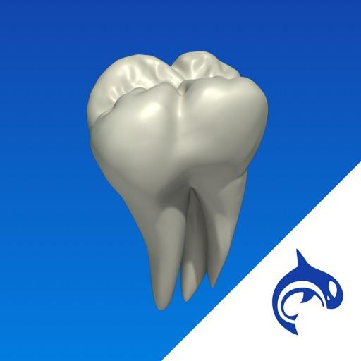 Dental Decide - Education & Engagement