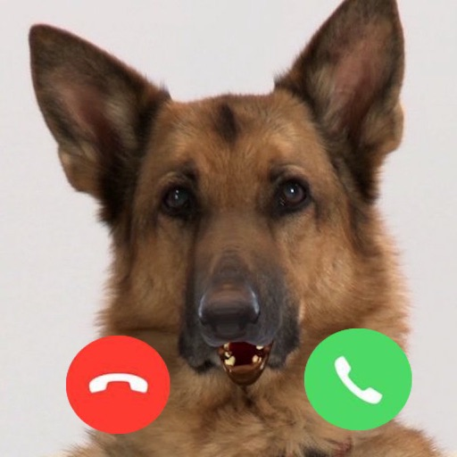 My Talking Dog - Video Call Dog icon