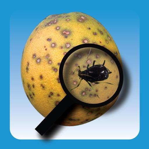 Protect U.S. Citrus Diseases and Pests