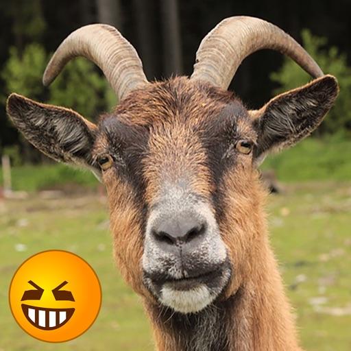 Funny Goat Sounds