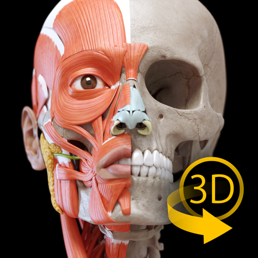 Мышцы   Скелет - 3D Атлас анатомии
