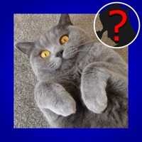Codes for Domestic Cat Breed Quiz Maestro Hack