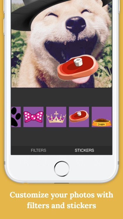 Flockr - Pet social network