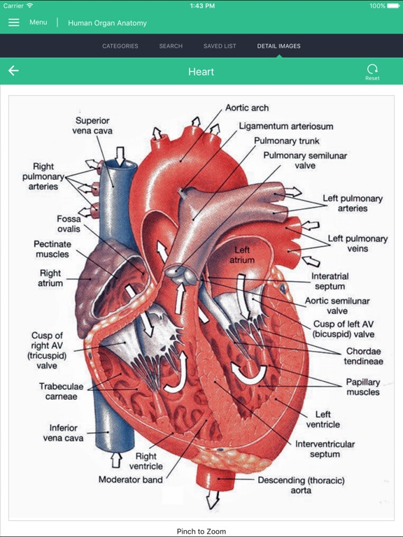 Human Organs Anatomy Reference   App Price Drops