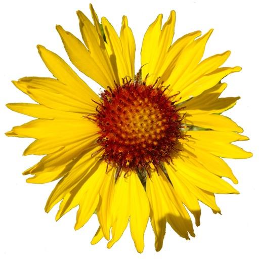 Flora of the Yellowstone Region