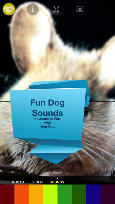 Dog Vision HDのおすすめ画像4