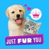 Just Fur You - Animated Hallmark Stickers Reviews