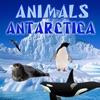 動物南極大陸