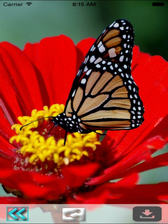 Butterfly Wallpapers Hd Best Backgrounds Themes App Price