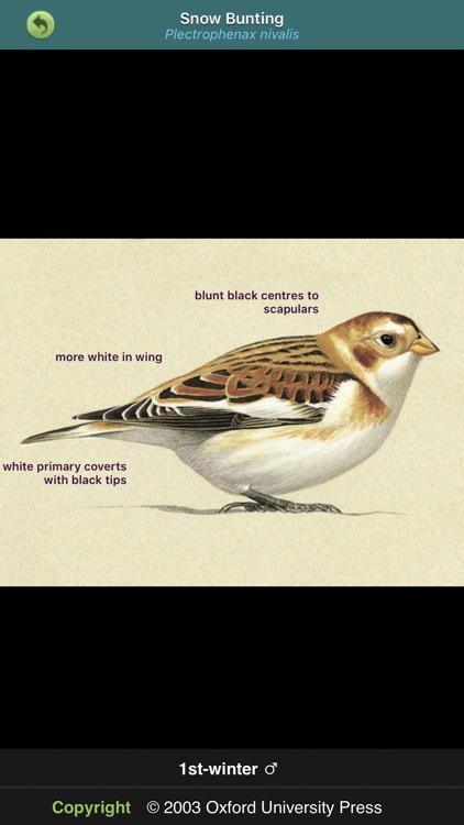 Birds of Britain & Ireland
