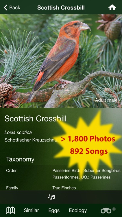 All Birds Scotland Complete Guide Scottish Birds