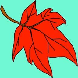 Leaf Adventure