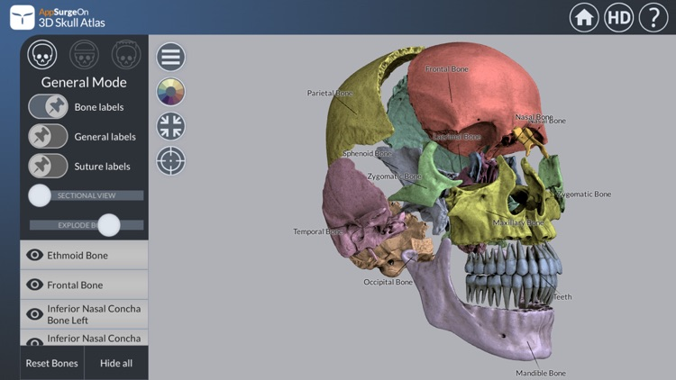 3D Skull Atlas screenshot-3