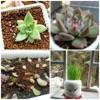 家庭养花大全 - 家庭与办公室养花园艺宝典