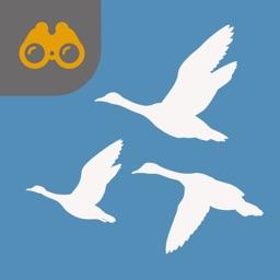 UK Seabird Guide