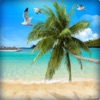 Beautiful Palm Tree Wallpapers (HD) - Backgrounds