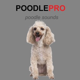 Poodle Dog Sounds