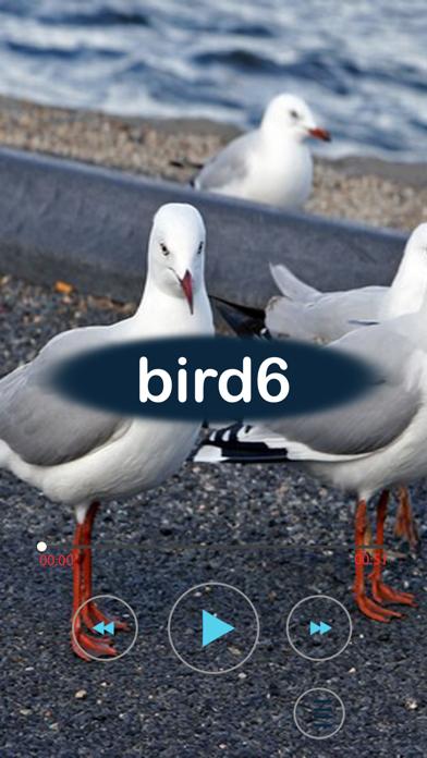 نغمات باصوات الطيورلقطة شاشة3