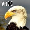 VR Fly With A Real Bald Eagle Virtual Reality 360 - iPhoneアプリ