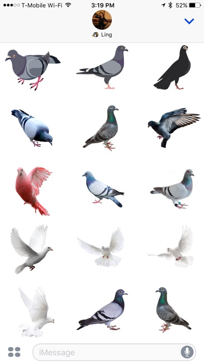 Trash Birds - Funny Realistic Pigeons screenshot-3