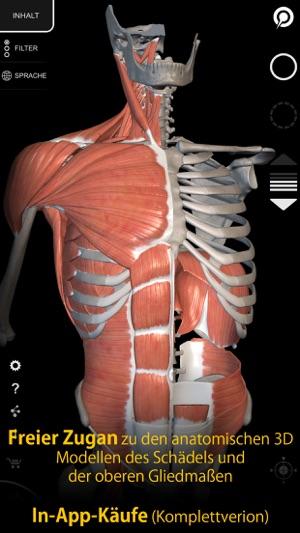 Muskeln | Skelett - Anatomie im App Store