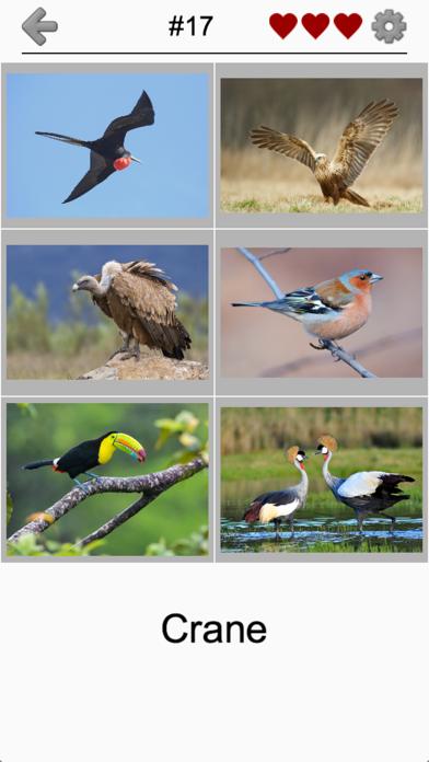 Bird World - Quiz about Famous Birds of the Earth screenshot 2