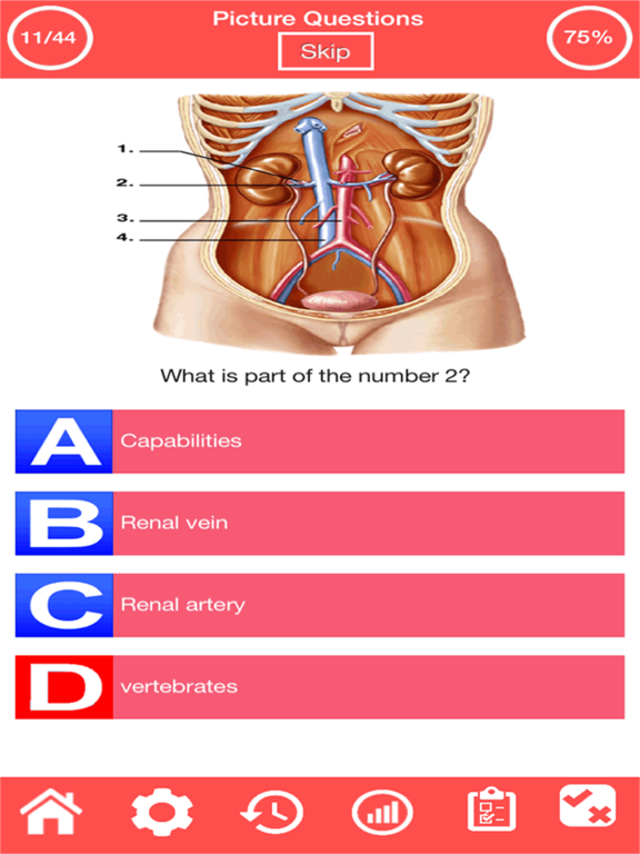 Human Urinary System Quiz screenshot 3