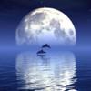 Reflection - 感動するほど幻想的! 水に反射した画像を自動で作る