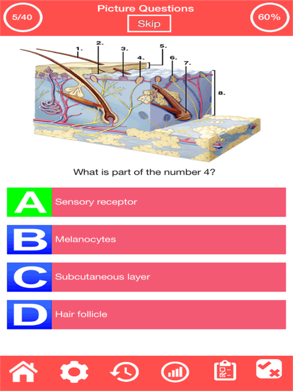 Integumentary System Quiz screenshot 3