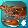 龙虾-袋鼠跳跳