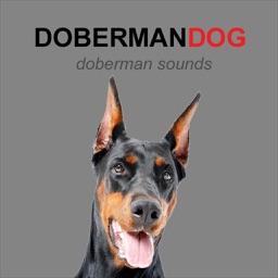Doberman Dog Sounds and Barking