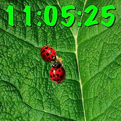 Ladybugs clock