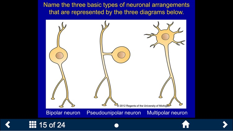 Histology - Nervous System screenshot-3