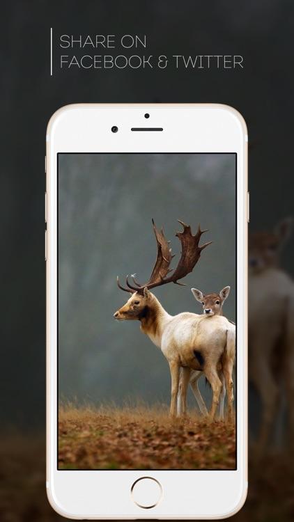 HD Wallpapers for Deer Hunting