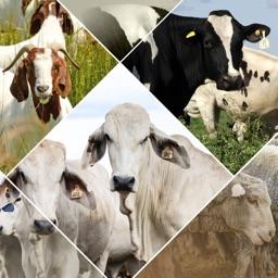 Veterinary Handbook
