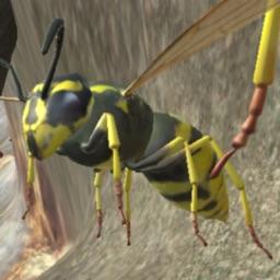 Wasp Nest Simulation Full
