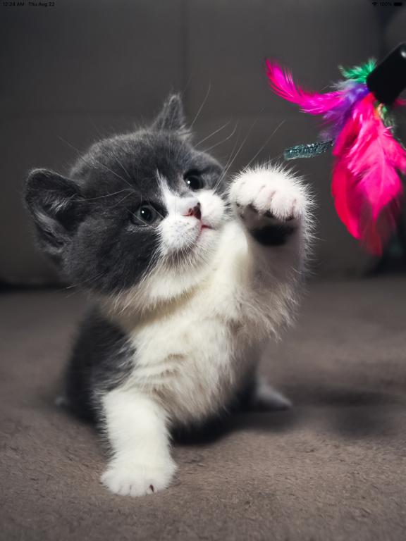 Cat Wallpapers Cute App Price Drops