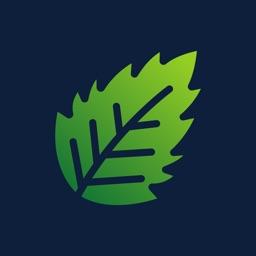 iFinance: Financial Companion