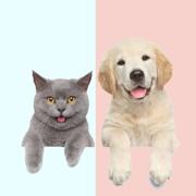 猫狗翻译器 · 人猫交流器猫咪狗语翻译器