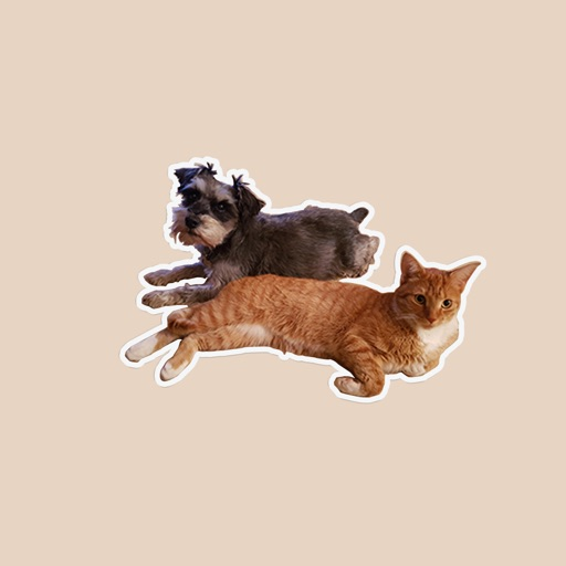 BFF Cats and Dogs